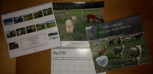 2016 alpaca calendar